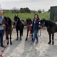 Ponies detained at Belfast port due to Brexit paperwork errors released