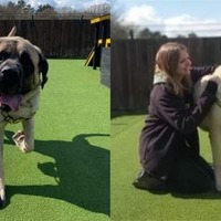 Shelter searches for home for its 'biggest ever' dog