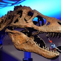T. rex delivered bone-crushing bites by keeping a stiff jaw, research suggests