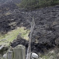 Environment Minister urged to establish a cross-departmental task force in response to Mournes fire