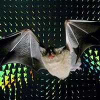 Scientists create bat-like technology that produces images from sound