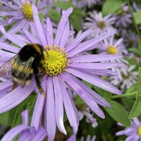 Gardening: How to help bees all year round thanks to a nifty flower calendar