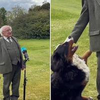 President Michael D Higgins' dog steals spotlight during TV interview