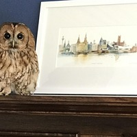 Owl drops down couple's chimney two days in a row