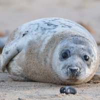 Engineers and biologists join forces to reveal how seals evolved to swim