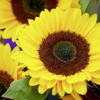 Gardening: Kids will love sowing seeds during half term