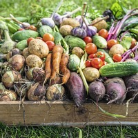 The Casual Gardener: It's important to feed to feed – but not overfeed – your plants