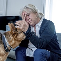 Paws for thought: Dogs whose owners are stressed have higher stress hormone levels