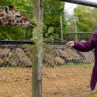 Grandmother, 91, who had world's first Pfizer jab meets giraffe namesake
