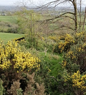 Ulster Way walk around Ring of Gullion 'impassable' after falling into disrepair