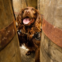 Whisky maker employs full-time sniffer dog – and his boss is called Mr Wooff