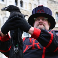 Results of public vote to name Tower of London's baby raven announced