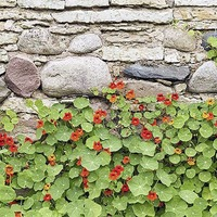 Gardening: Five easy seeds to grow as a family