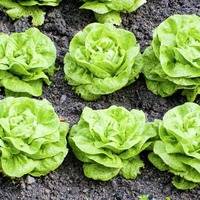Nutrition with Jane McClenaghan: You just can't beat growing your own food