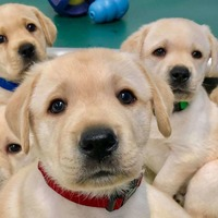 Stormont ministers discuss register for those banned from owning animals