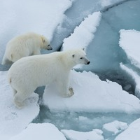 Arctic sea ice 'thinning up to twice as fast as previously thought'