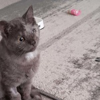 One-eyed kitten with a hole in its heart waits for new home