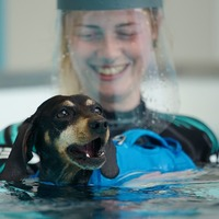 Battersea opens hydrotherapy centre for dogs