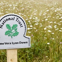Wildflower meadow on White Cliffs of Dover named in honour of Dame Vera Lynn
