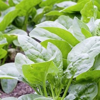 Gardening: If you're always throwing away bagged salad, try growing your own lettuce mix