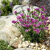 Gardening: How to reuse old concrete, paving slabs and poor soil to create a beautiful garden