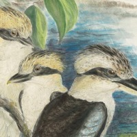 Export ban put on pictures by ornithologist John Gould valued at more than £1.2m