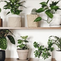 Gardening: Six simple plants that thrive on being kept indoors and are all easy to look after