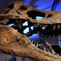 Dinosaurs were in decline up to 10 million years before asteroid hit – study