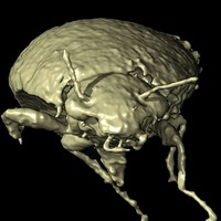 230m-year-old beetle species found in fossilised droppings of dinosaur ancestor