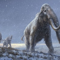 Climate change – not humans – started decline of ancient elephants, says study