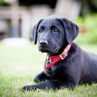 5 mistakes new puppy owners really need to avoid, according to TV vet Luke Gamble