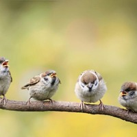 Stephen Colton's Take On Nature: A time of sparrow chirp
