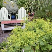 Casual Gardener: A worthy mantle