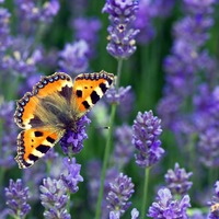Chris Packham urges people to join butterfly count to reveal climate impacts