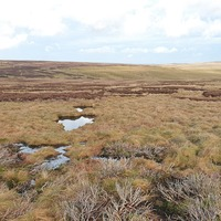 Satellite technology used to monitor how bogs 'breathe'