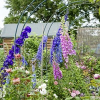 Gardening: Why should I get an allotment? Four celebrity gardeners offer the answers