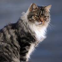 Chinese city kills three cats after they test positive for coronavirus