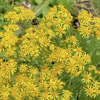 Casual Gardener: Go native and bee friendly