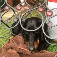 Sausage dog freed after getting wedged in wine rack