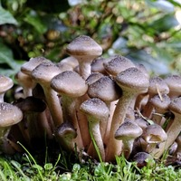 Gardening: How to grow mushrooms – and help save the earth