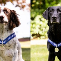 Bomb-sniffing RAF dogs who served for six years awarded animal OBE