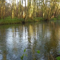 Conservation project to return Norfolk chalk stream to former glories
