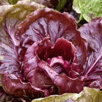 Gardening: What veg can you grow in the autumn?