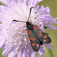 Make moths welcome