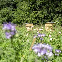 Bee friendly and join the weekend buzz at Hillsborough's Honey Fair