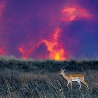 Take on Nature: Beds are burning