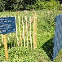 Hillsborough Castle's first Honey Fair 'the bee's knees'