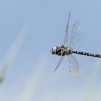Take on Nature: Dragonflies and damselflies are reminders of life's brevity - and the importance of enjoying the moment