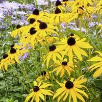 Gardening: How to rewild your garden with prairie planting