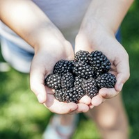 Nutrition: September - the perfect time to refresh your diet